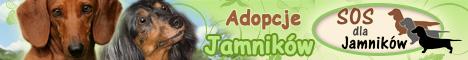 Strona Adopcyjna Fundacji SOS DLA JAMNIKÓW
